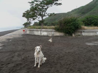 Белая и её дети