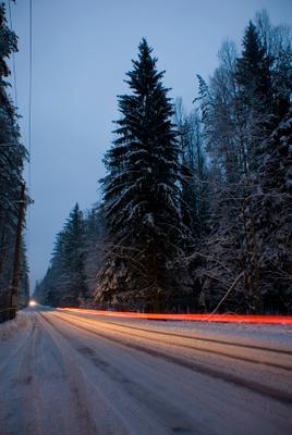 безымянная дорога ель, дорога, елка, свет, фары