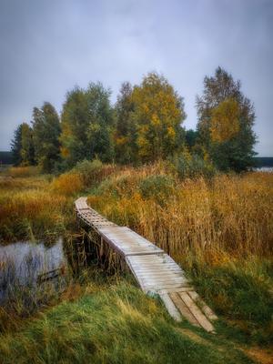 Дорожка в осень