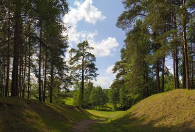 Летний парк парк лето солнце деревья трава