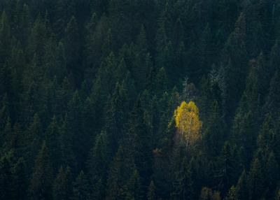 Alone пейзаж Лес осень