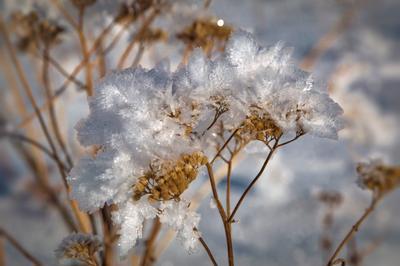 Цветы Снежной Королевы.... Зима иней снег солнце кристал