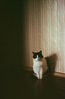 Barsik кот