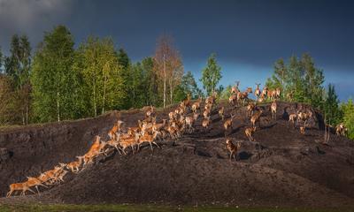 Там где живут олени олени осень