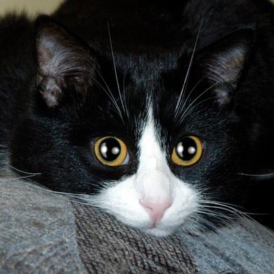 чО? 8) кот