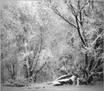 *** снег природа деревья зима иней