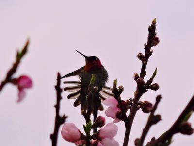 На рассвете. Рассвет колибри птица весна розовое