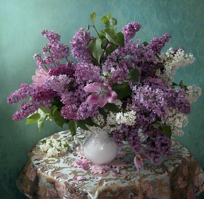 Сирень Натюрморт сирень весна букет цветов