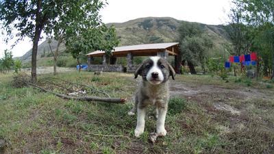 Ребенок собака грузия мой друг кормил