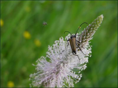 ангел пролетел жук усач мошка