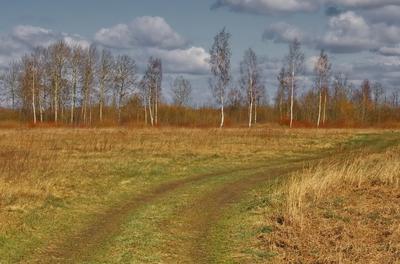 Полем Природа пейзаж поле полевая дорога березы
