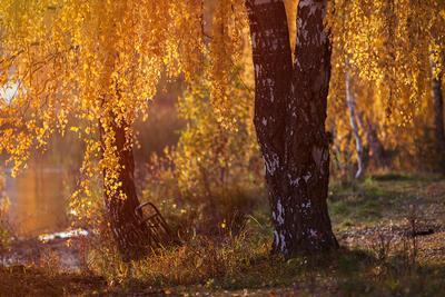 Про забытую кровать закат урал россия пейзаж береза