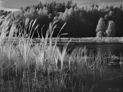 Верятинский «лиман» Reeds Hasselblad 645 rollei superpan landscapes filmphotography blackandwhitephotography bnwphotography