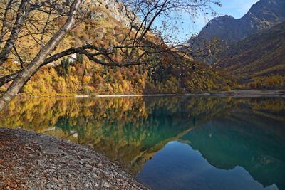 Золотой Кардывач Осень Кавказ