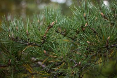 Ветки (twigs) 5 Ветки twigs Ревда природа лес деревья