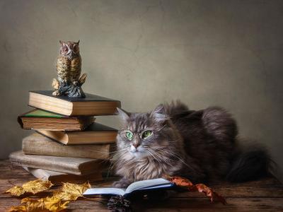 ***- Хорошо, когда есть , что почитать осенними вечерами! домашние животные кошка Масяня книги осень очки