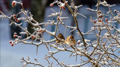 *** зима природа птицы