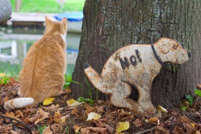 А кошки умеют читать? кошка, плакат, дерево
