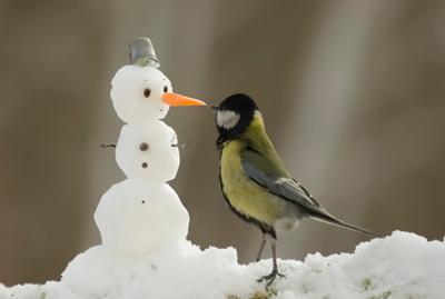 Ты кто? птицы восточной сибири большая синица сюжет