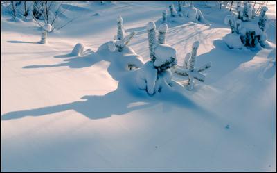 зверушка снег зима причуды природа зимушка белое тени ёлочка веточки