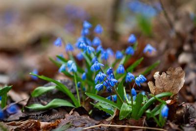 Весенние цветы Подснежники весна весенние цветы