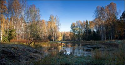 После заморозка Павловск, октябрь, заморозак