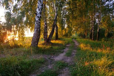 Волжские закаты лето вечер закат берег Волги дорога