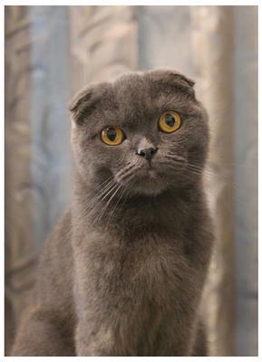 Портрет Барсы кошка протрет