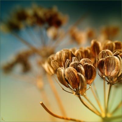 Семена семена, плоды, макро, коричневый, охра