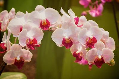 *** орхидеи природа цветы