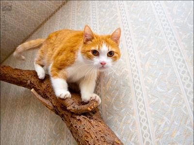 Я тигренок, а не... кошка Машка
