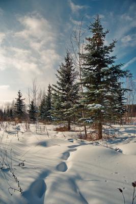 Мороз и солнце пейзаж снег лес подмосковье Одинцово ёлка небо мороз зима Кольцов Юрий Юрьевич juriy68