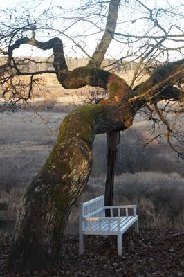 Скамья Онегина в Тригорском Музей Тригорское Пушкинские горы национальный парк