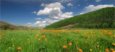 Цветы Зелёной  долины долина весна цветы жарки облака
