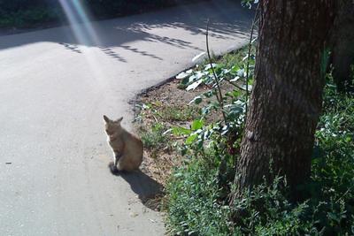 Созданье света свет, луч, кошка, дорога, лето, тень, кот
