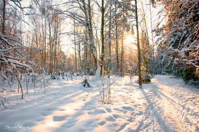 Лосиный остров лосиный остров зима лес снег