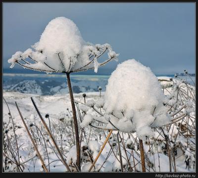 Снежки Горы Кавказ снег