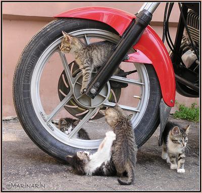 Байкеры  Котята мотоцикл байкеры