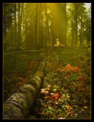 что такое осень... осень лес свет