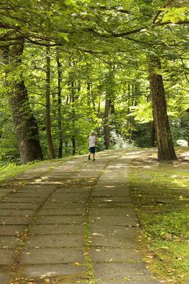 зеленый лес лес прогулка тропинка дорожка