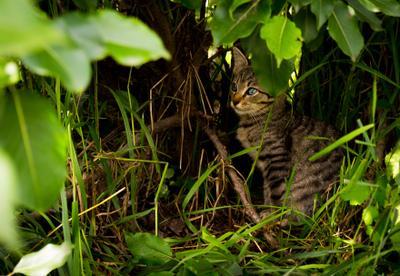 Жительница двора Животные кот кошка природа