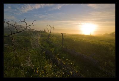 Утро рассвет туман паутина