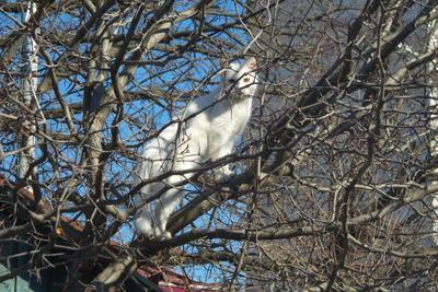 Февральская кошка кошка февраль колючка весна боярышник