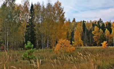По опушке леса тихо бродит осень