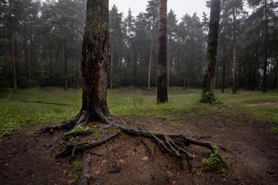 Мокрый лес Лес дождь деревья