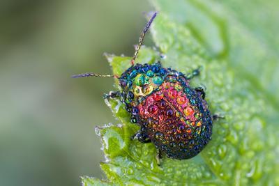 Палитра капель жук роса капли цвета