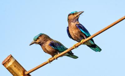 Разноцветные Фотоохота птицы