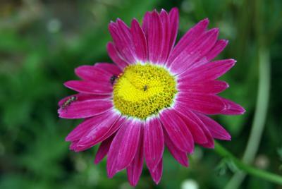 *** раз, два. три цветок насекомые мухи мушки