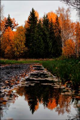 Осень в Александровском парке Санкт-Петербург Пушкин осень листопад отражение в воде