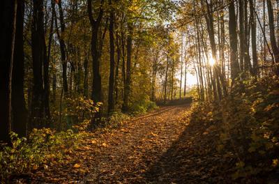*** disfoto light november wald sun sonne herbst autumn